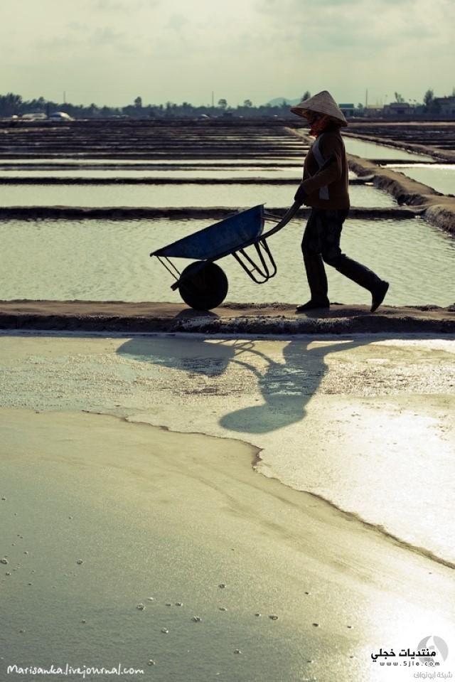 استخراج الملح طريقة استخراج الملح
