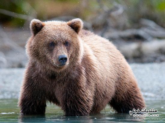 بحيرة الدب العظيم 2014 اكبر