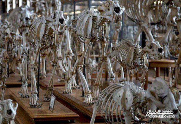 متحف الرعب فرنسا متحف الرعب