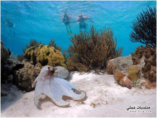 السياح البحار اجمل الاماكن السياحية