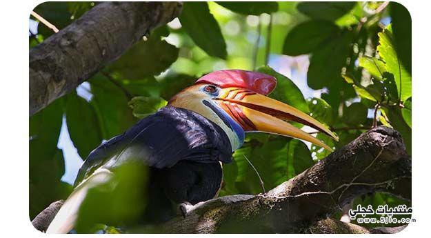 طائر البوقير