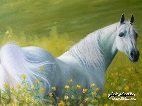 تفسير رؤية ابيض روئية حصان