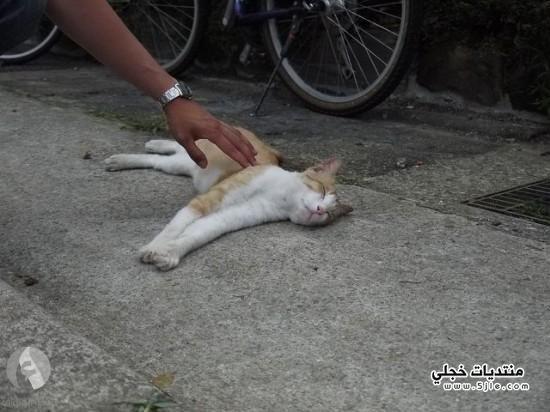 قرية القطط معلومات قرية القطط
