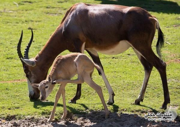عالم الحيوان حيوانات للحيوانات