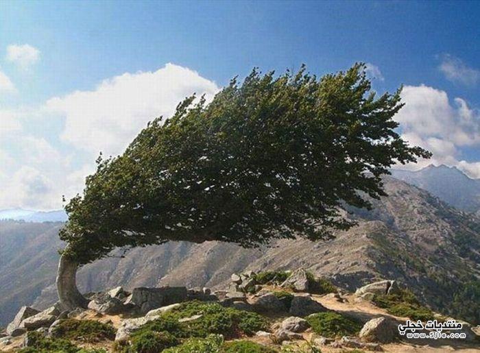 اشجار