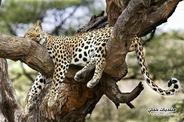الحياة البرية
