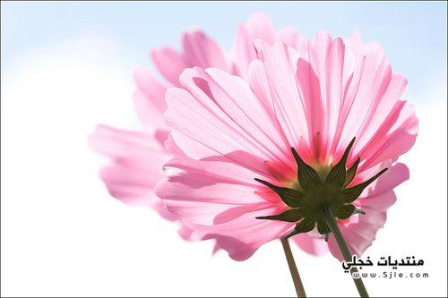 اجمل الزهور العالم اجمل الورود
