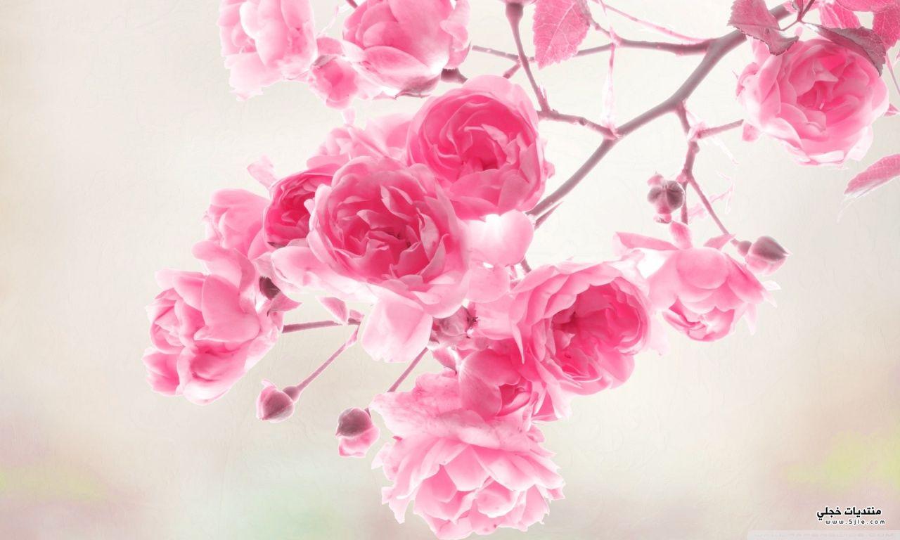 اجمل الورود الطبيعيه