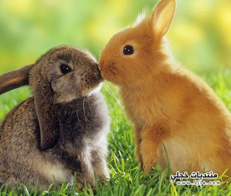 خلفيات ارنب