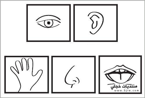 رسومات تلوين الحواس الخمس