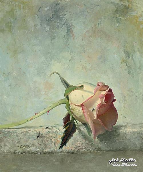 خلفيات الورد جميل 2014