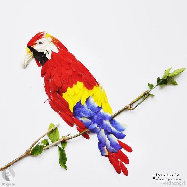 اشكال طيور الزهور