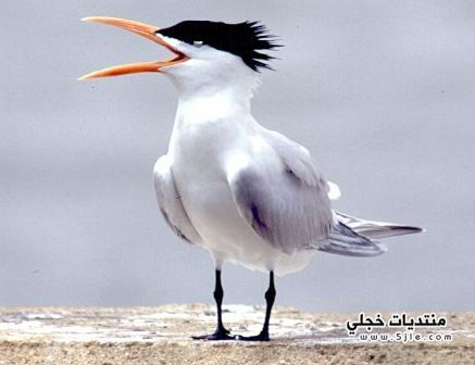 مناقير الطيور