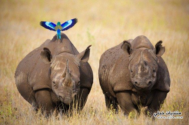 حيوان وحيد القرن وحيد القرن