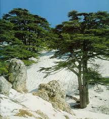الاماكن السياحيه لبنان
