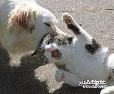 اسباب العداء الكلب والقطة