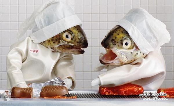 اعمال فنية عجيبة الأسماك