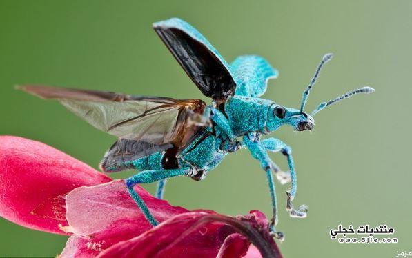 جمال الحشرات