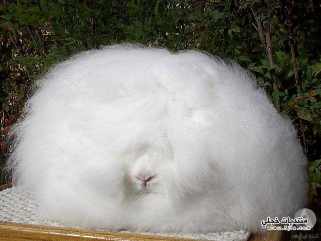 ارنب بشكل غريب