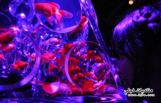 خلفيات فقاعات مائية للايفون رمزيات