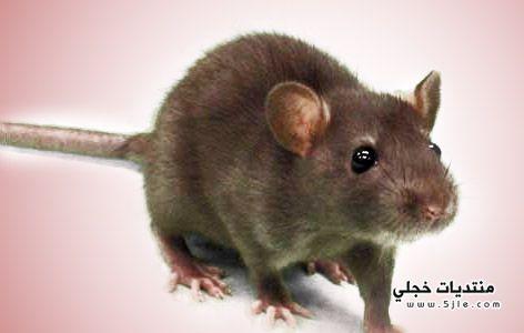 طريقة للتخلص الفئران