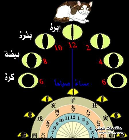 معرفة الوقت عيون القطط