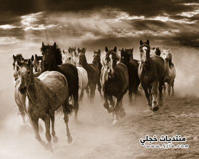 ���� 2013 Photo horses 2013