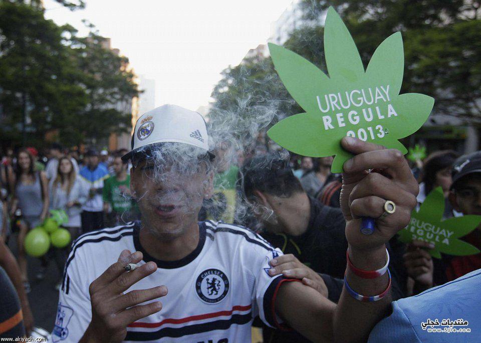 بالصور تقنين الماريجوانا أورجواى