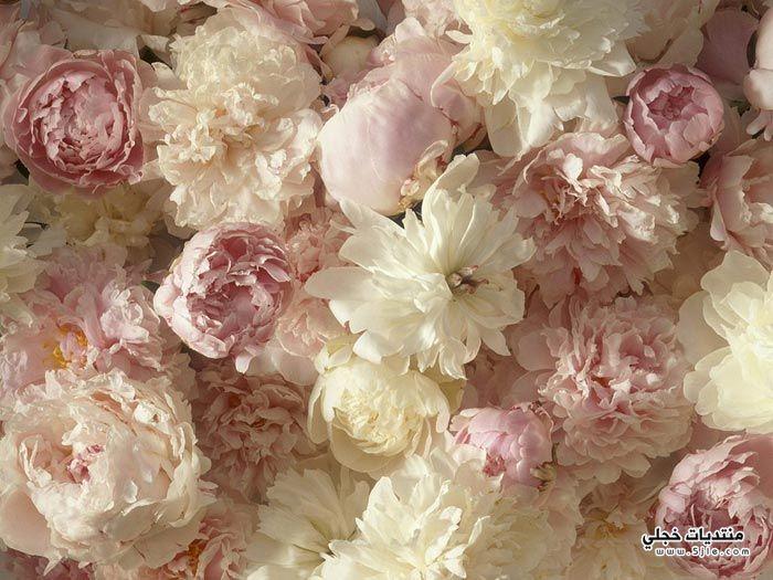 ورود باللون الوردي 2014