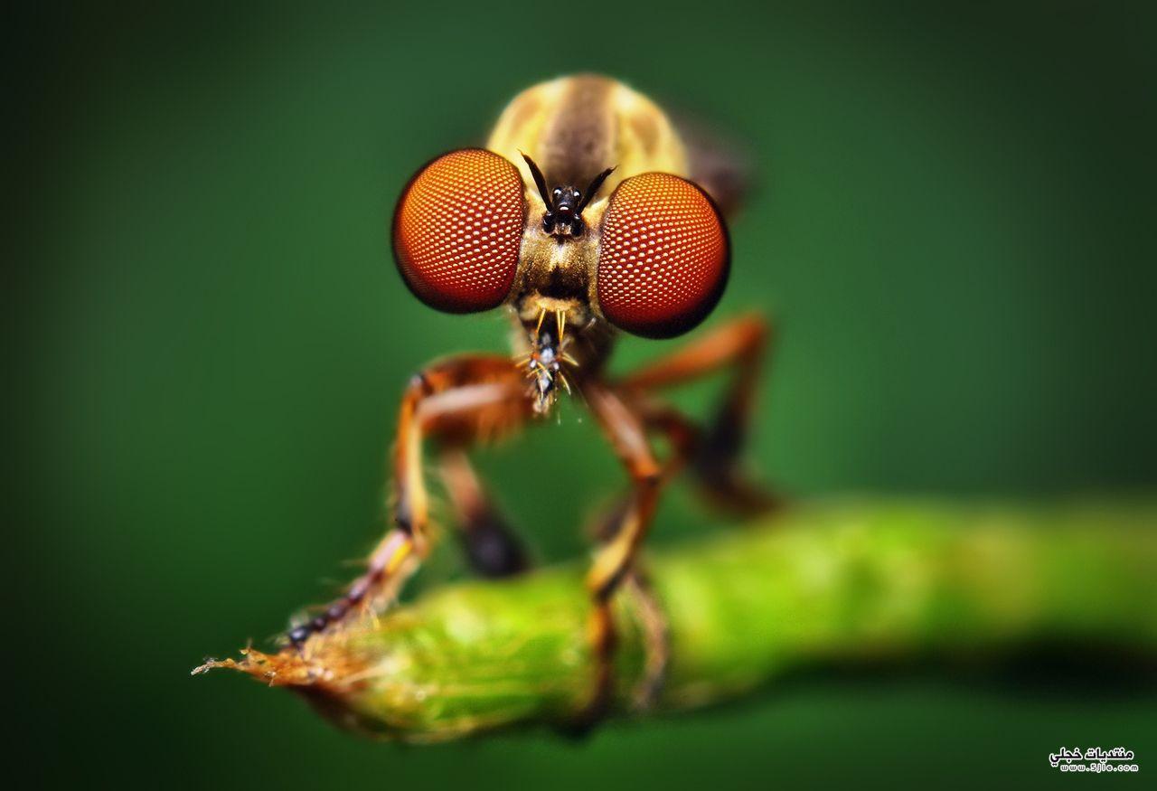 حشرات غريبة 2014