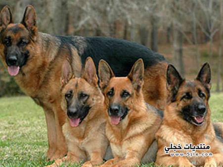 كلاب بوليسية 2016